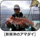 H28年11月のターゲット 船長さん・漁師さんに直接お聞きしました!!