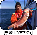 H29年3月のターゲット 船長さん・漁師さんに直接お聞きしました!!