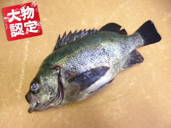 0502nishiyama