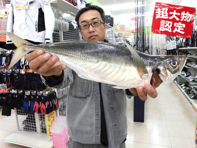 161114oomono_ooyama