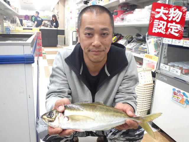 170408oomono_ozeki_aji
