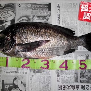 170930oomono_hasegawa