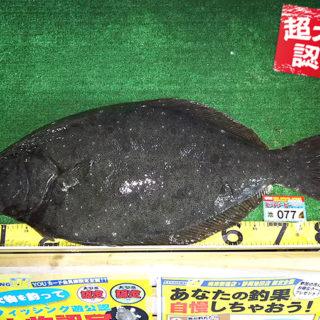 180105oomono_hasegawa