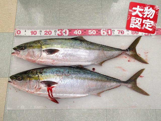 180128oomono_yanase