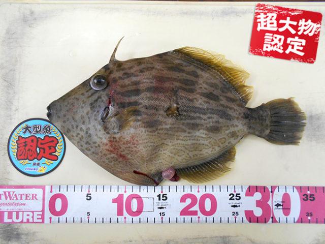 190302oomono_ogawa