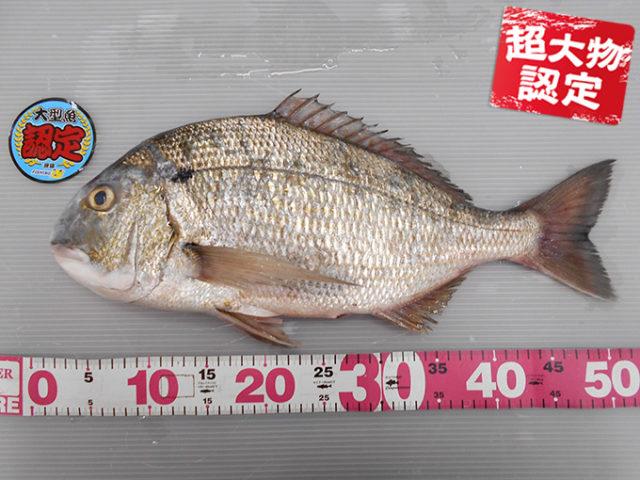 190505oomono_kinoshita1