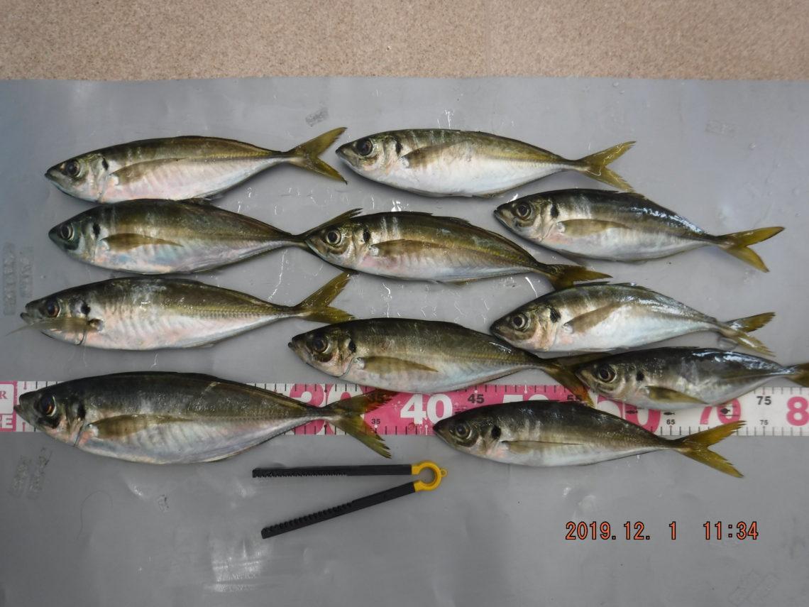 釣果が少しづつ代わりつつ有ります。