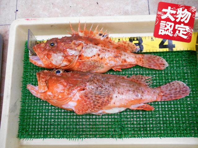 200404oomono_hirata
