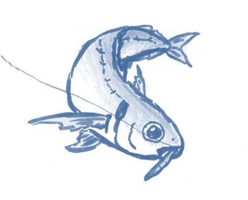 本日の魚イラストです(もう少し続きますよ!)