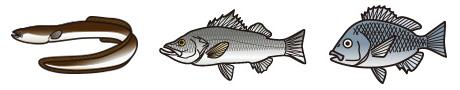 夜釣りの対象魚