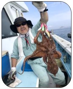 師崎沖のイサキ