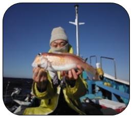 2021年1月の沖釣りターゲット 船長さん・漁師さんに直接お聞きしました!!