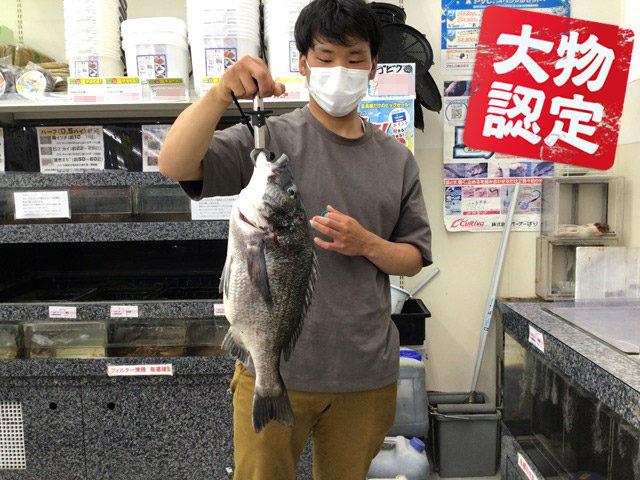 6月17日-島田-比乃樹様